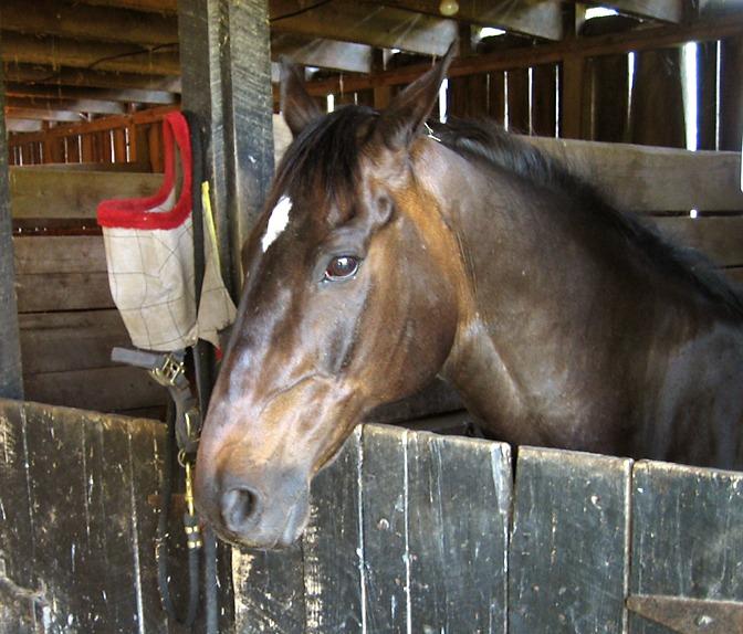 Rockbrook Camp Horses