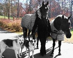 Cara Thompson Equestrian Summer Program Director