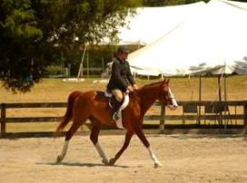 Equestrian Riding Horse Profound