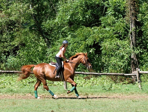 Riding Horses Canter