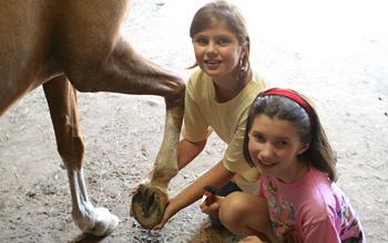 Equestrian Camp Training