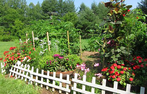Rockbrook Camp Vegetable garden