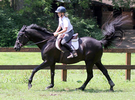 Kid Trot Horse at summer camp