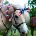 4th of July Horse