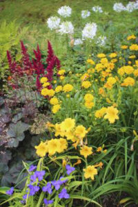 Flowers of Rockbrook