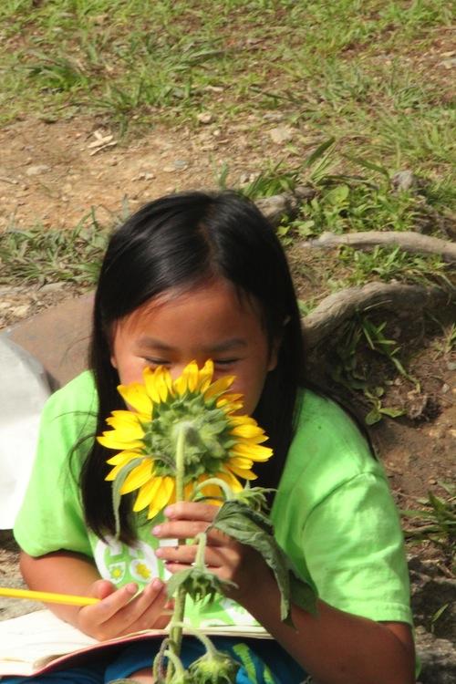 rbc sunflower