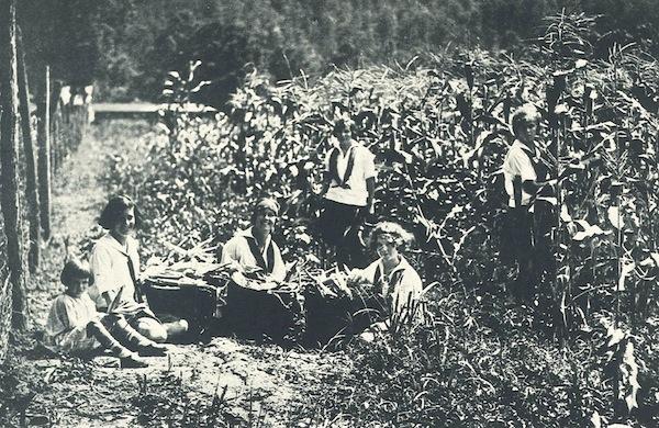 Corn 1926