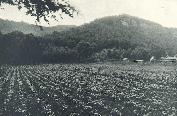 Garden 1926
