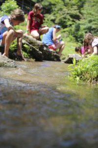 simple creek